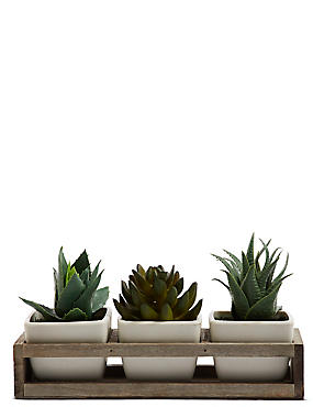 Trio Succulents in Wooden Tray