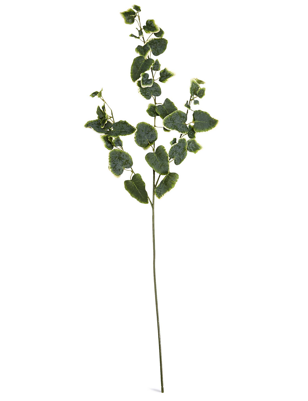 Ivy Stem