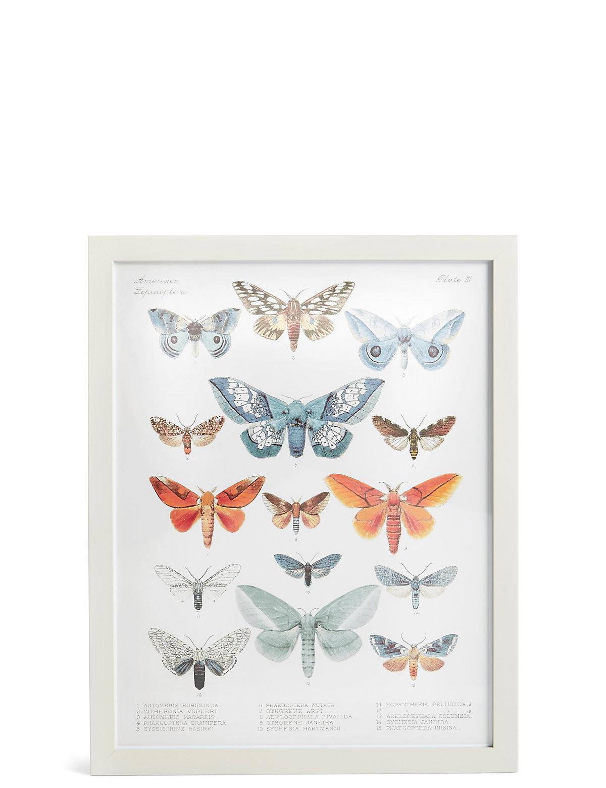 American Lepidoptera Wall Art