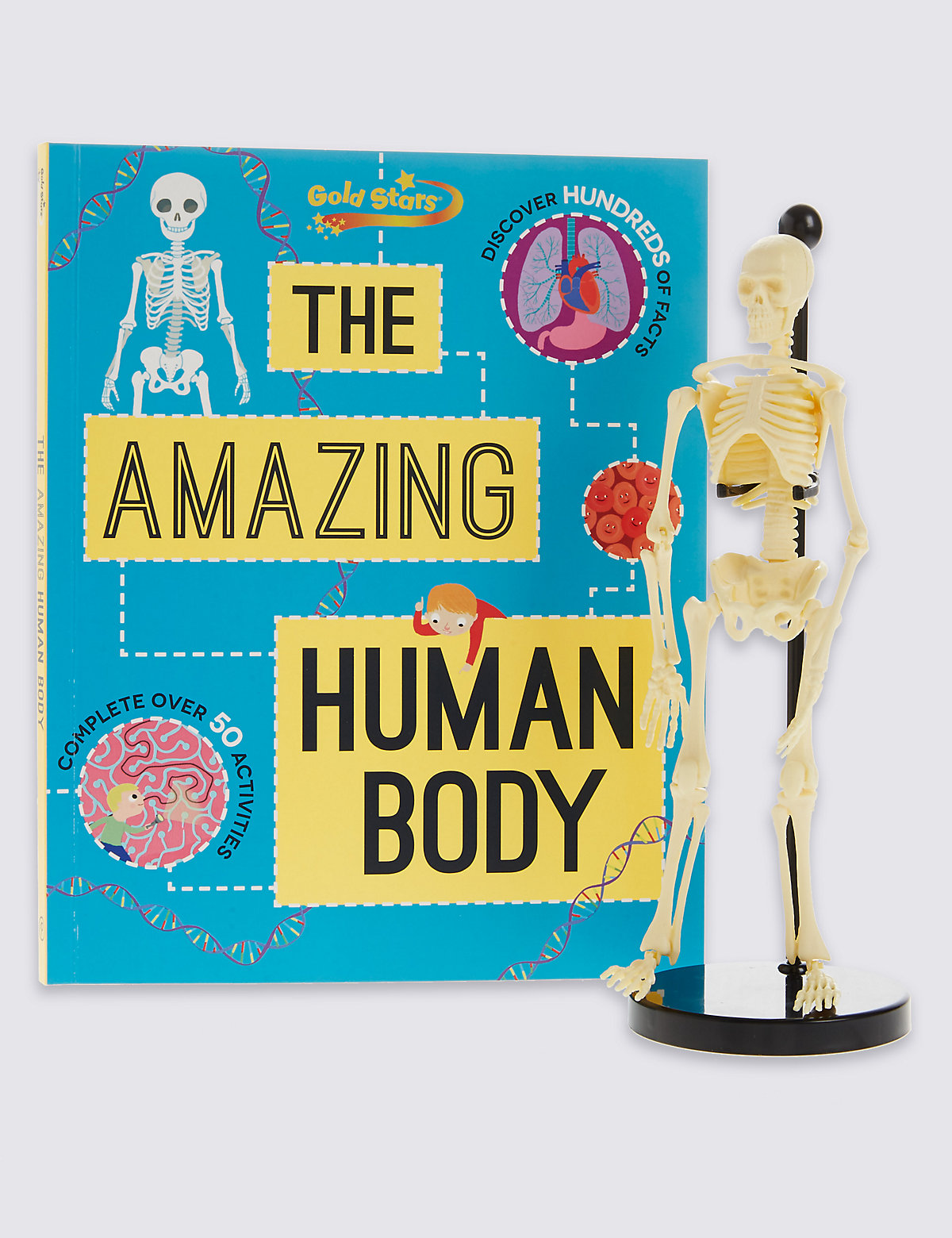 Human Body Factivity Book