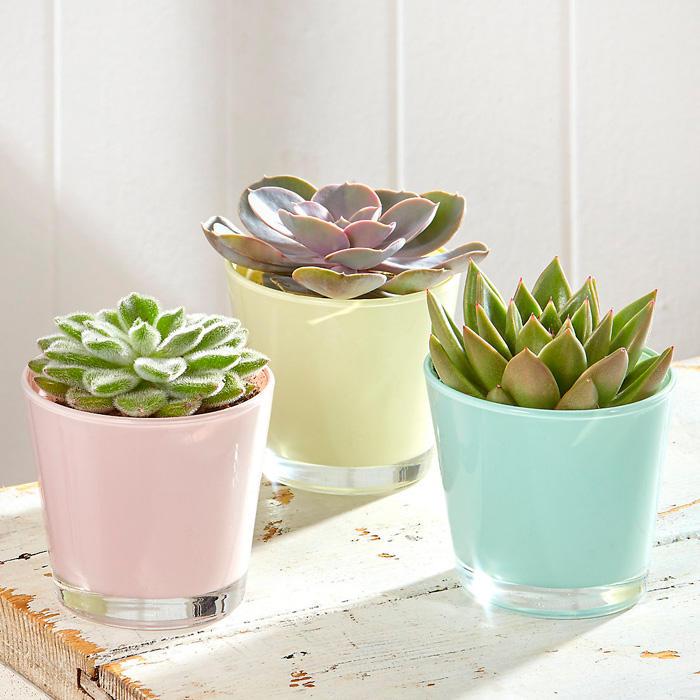 Summer Home Decor Ideas: pastel succulent pots
