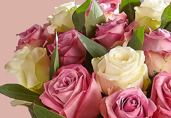 Autograph roses from our new-in range