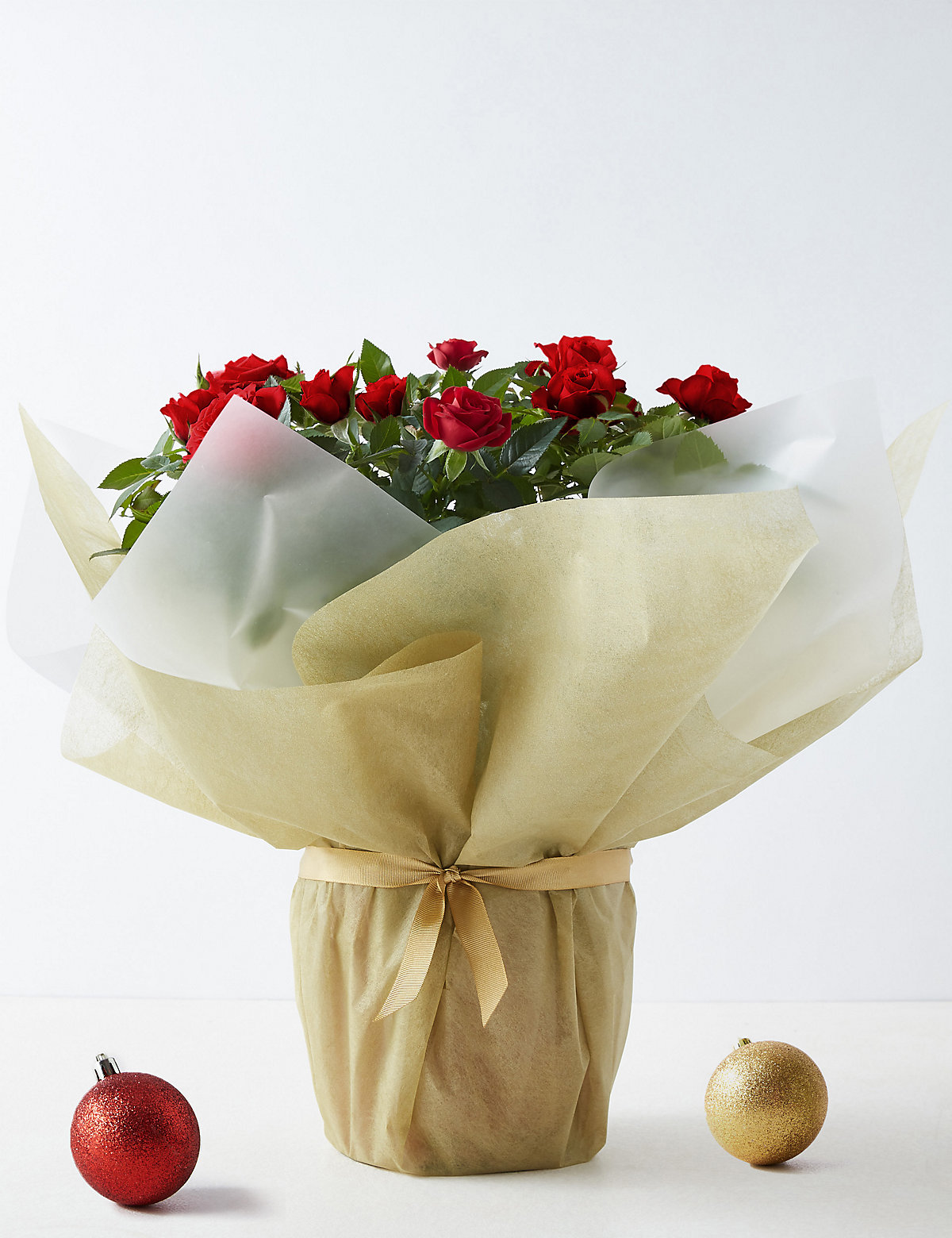 Image of Large Christmas Gift-Wrapped Red Rose