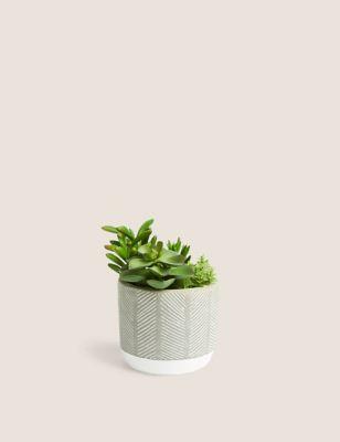 Artificial Succulent Garden