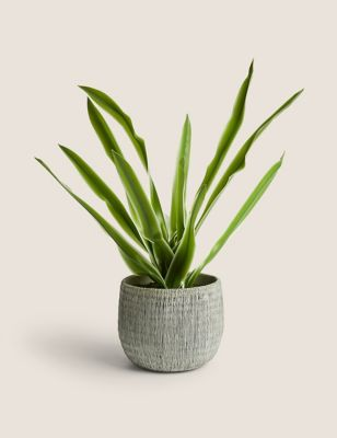Artificial House Plant in Textured Pot