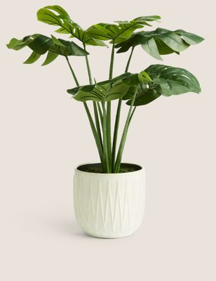 Artificial Cheese Plant in Glazed Pot