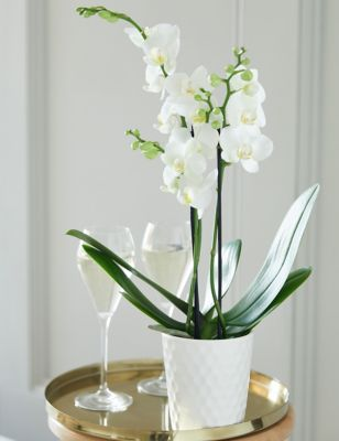 You're so lovely Orchid Gift Bag