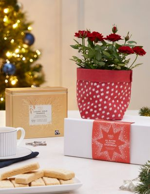 Festive Afternoon Tea with Rose Plant (Delivery from November 2021)