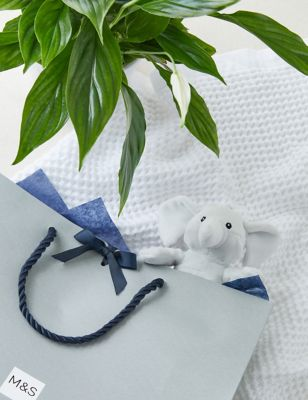 A Bundle of Joy New Baby Peace Lily Gift