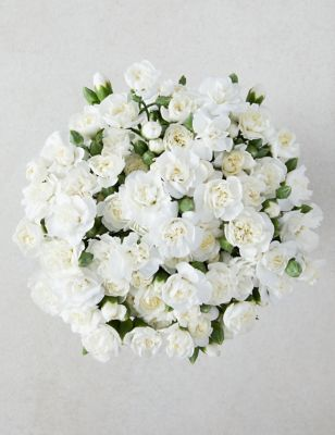 Pink Avalanche™ Roses