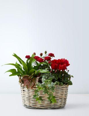 Luxury Flowering Basket
