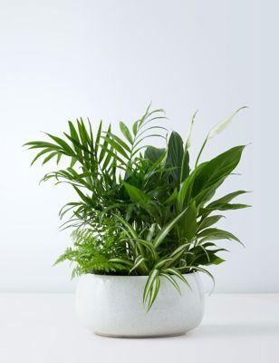 Foliage Bowl