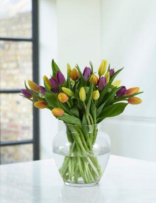 British Spring Tulip Trio Abundance
