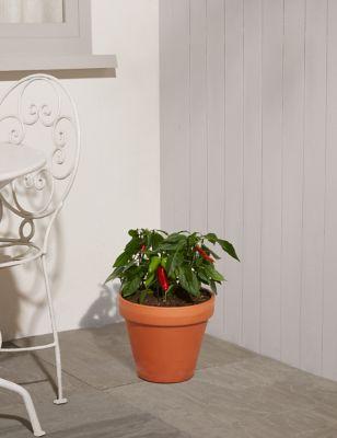 Chilli Planter