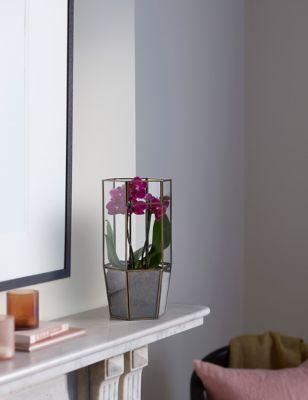 Luxury Outdoor Planter