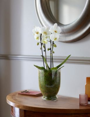 Luxury Orchid Glass