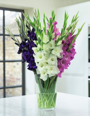 British Gladioli Abundance