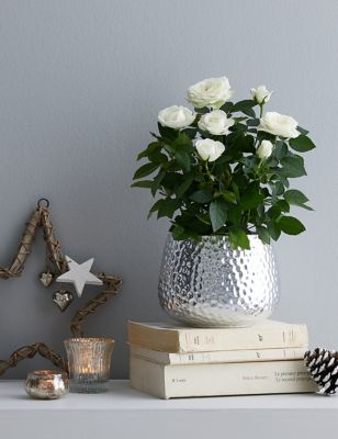 Christmas White Rose with Ceramic Pot (Delivery from 9thNovember2021)