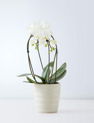 Miniature White Cascade Orchid Ceramic