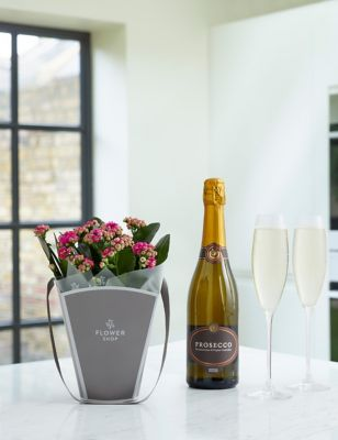 Kalanchoe Gift Bag with Prosecco